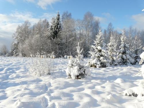 stropi_sniegaa3