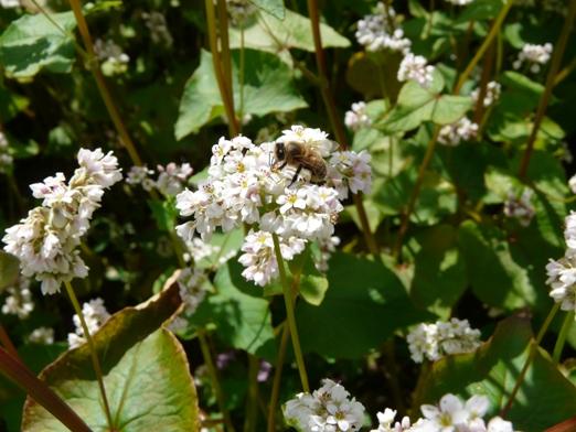 bite-griki