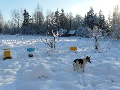 nukl_sniegs2